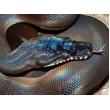 Средства со змеиным  пептидом